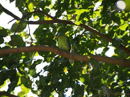 Free Images : tree, branch, sunlight, leaf, flower, green, jungle, produce, autumn,  monk, botany, flora, shrub, deciduous, flowering plant, colored birds,  quasi woodpecker, muller's barbet, woody plant, land plant 4608x3456 - -