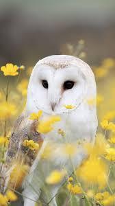 Download 41,439 best hd wallpaper. Barn Owl Wallpaper Kolpaper Awesome Free Hd Wallpapers