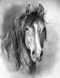 Disegni A Matita Animali Realistici 30 Disegno Arte