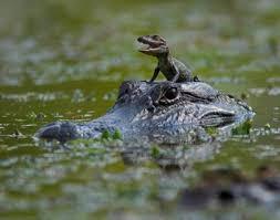 Resultado de imagem para mães e bebés animais