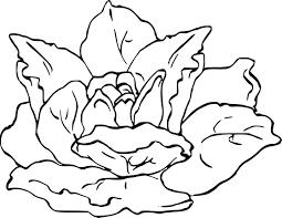 Coloriage Laitue Dessin Imprimer Sur Coloriages Info