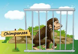 zoo animals in cages clipart. Modren Zoo Illustration Of A Chimpanzee In Cage And Wooden Board Royalty Free Zoo  Animals  Inside Cages Clipart S
