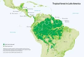They cover approximately six per cent of the earth's surface, and because they get 2,000 mm of rain. Tropical Forest In Latin America Grid Arendal