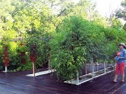 backyard gardening. Backyard Gardening