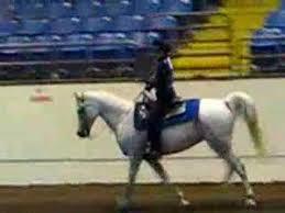 2007 Missouri State Fair Horse Show 4 H Horsemanship 13 14 Youtube