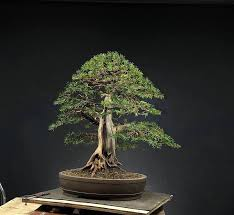 [New] The 10 Best <b>Home Decor</b> (with Pictures) | <b>Bonsai</b>, Tropical