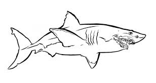 Simple Big Outline Shark Tattoo Design Tattooimages Biz