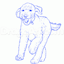 Small Picture labradoodle art Google Search dog art Pinterest Art google