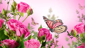 Butterfly pictures ...