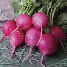 Types Of Radishes Chart Cool Season Crops