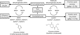 Alcohol Metabolism Chart Alcohol Its Absorption Distribution Metabolism And