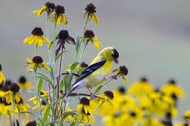 Seed-Bearing <b>Flowers</b> and <b>Birds</b>
