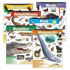 Exploring Series Learning Charts Combo Pack Set Of 6