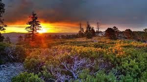 nature sunrise wallpaper