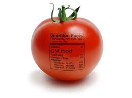 gm food essay essay about gm food example essay on genetically modified foodgenetically modified food essay custom essays term
