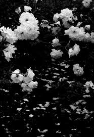 black and white flowers tumblr photography.  And Black And White Roses Inside And White Flowers Tumblr Photography P