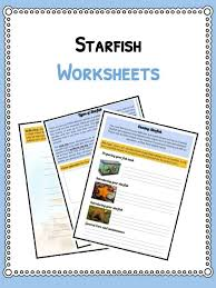 Starfish Facts Information And Worksheets Teaching Resources