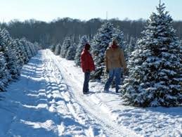 christmastree1 Best Places To Cut Down Your Own Christmas Tree In The DC  Area