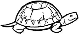 Small Picture Turtle Drawings nebulosabarcom