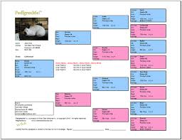 Bos Chart Template Free Rabbit Pedigree Templates Free Pedigree Chart