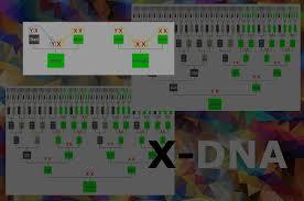 X Dna Fan Chart X Dnas Helpful Inheritance Patterns Genie1