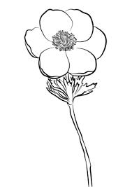 Disegno Di Anemone Da Colorare Disegni Da Colorare E Stampare Gratis