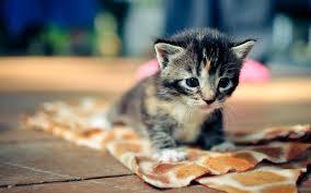 cute cat hd wallpaper wallpaper series