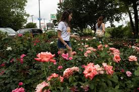 people walk through the rose garden