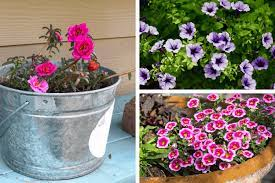 Look for varieties that open blossoms in a rainbow of hues. The Easiest Flowers To Grow And They Re Cheap Too