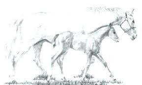 Spirit Horse Coloring Pages Horse Pictures To Color Packed With Free