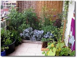 balcony garden. A Pic Of My Balcony Garden, Due To Having Dogs, Had Put Up Chicken Wire. Garden
