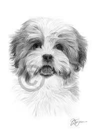 SHIH TZU dog art A4 size signed pencil ...