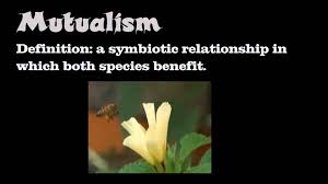 Image result for symbiotic relationships in politics