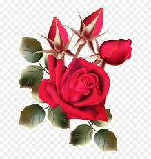 rose flower images free hd