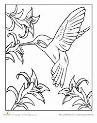 Small Picture Hummingbird Coloring Page Education 21494 Bestofcoloringcom