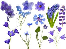 all types of flowers can be placed into two main groups monocots or dicots