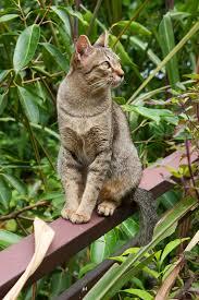 Cat Facts Petvetoasis
