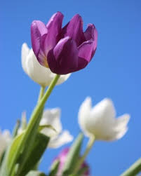 """Obituary for Margaret """"Peggy"""" C. Griffith 