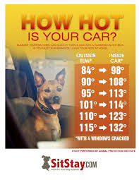 Dogs In Hot Cars Are In Extreme Danger How To Best Help A