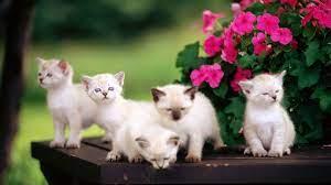 Cute Animals Hd Wallpapers 1080p - Cute ...