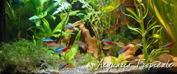 Acquari di casa il sito di acquariofilia per lacquario tropicale