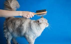 Узнайте — 7 важных правил, чтобы кошке было комфортно ...