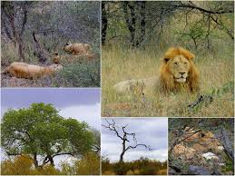 Image result for KRUGER national PARK