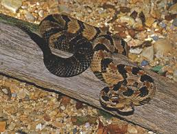 Identification And Control Of Snakes In Alabama Alabama
