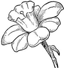 Small Picture Step finished narcissus How to Draw Daffodils with Daffodil