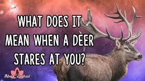 what does it mean when a deer stares at