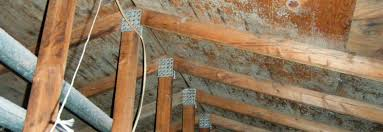 mold in attic. Exellent Attic Attic Mold Removal Michigan Metro Detroit For Mold In Attic
