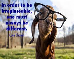 Goat Quotes Delectable Goat Quotes Photo
