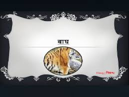 hindi essay on tiger for kids बाघ पर निबंध  hindi essay on tiger for kids बाघ पर निबंध