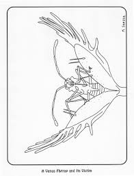 Free Carnivorous Plant Coloring Pages Carnivorous Plant Nursery